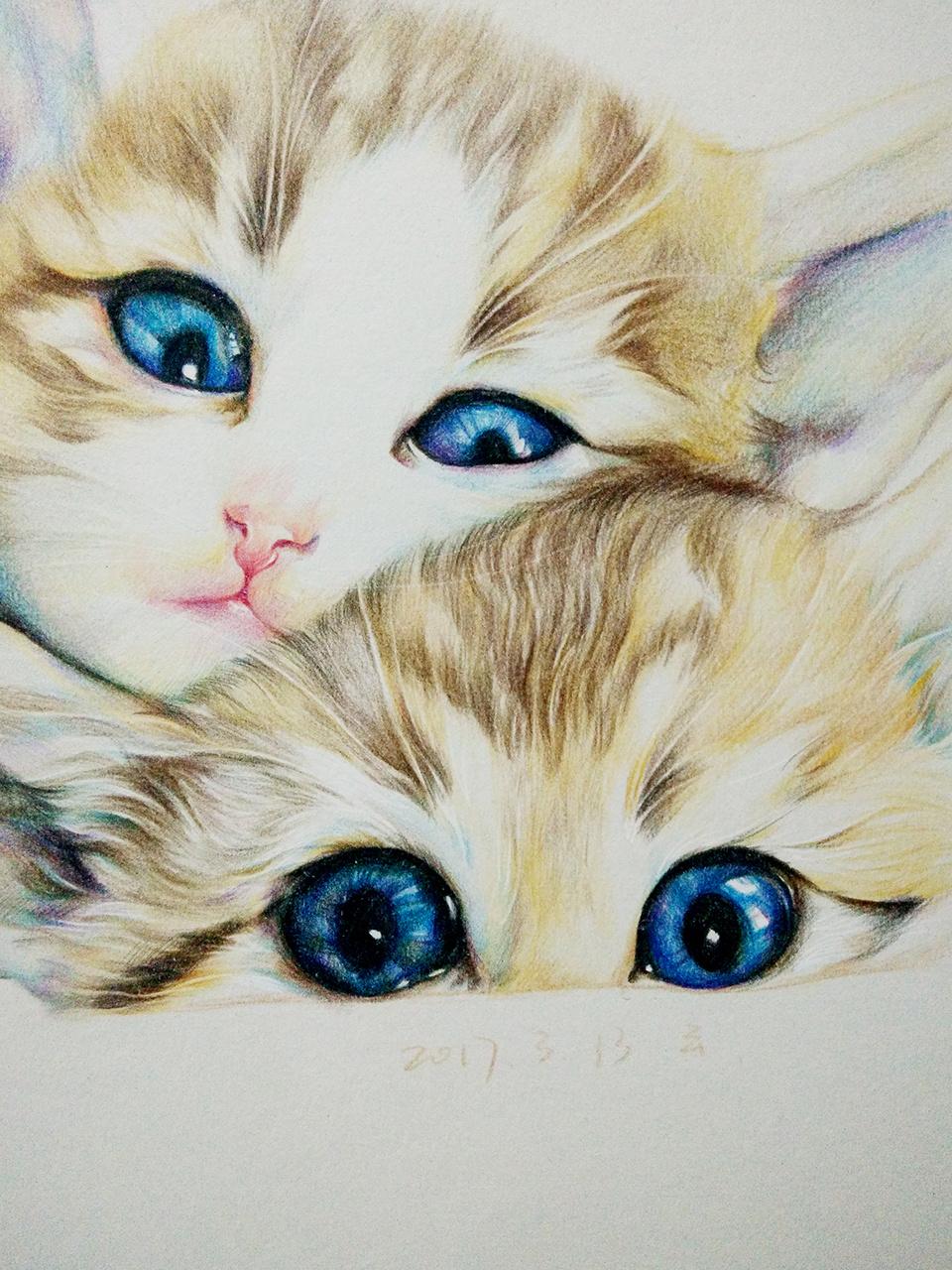 彩铅猫咪|纯艺术|彩铅|会画画的云 - 原创作品 - 站酷