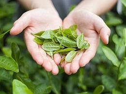 茶叶是大自然的味道-茶园摄影