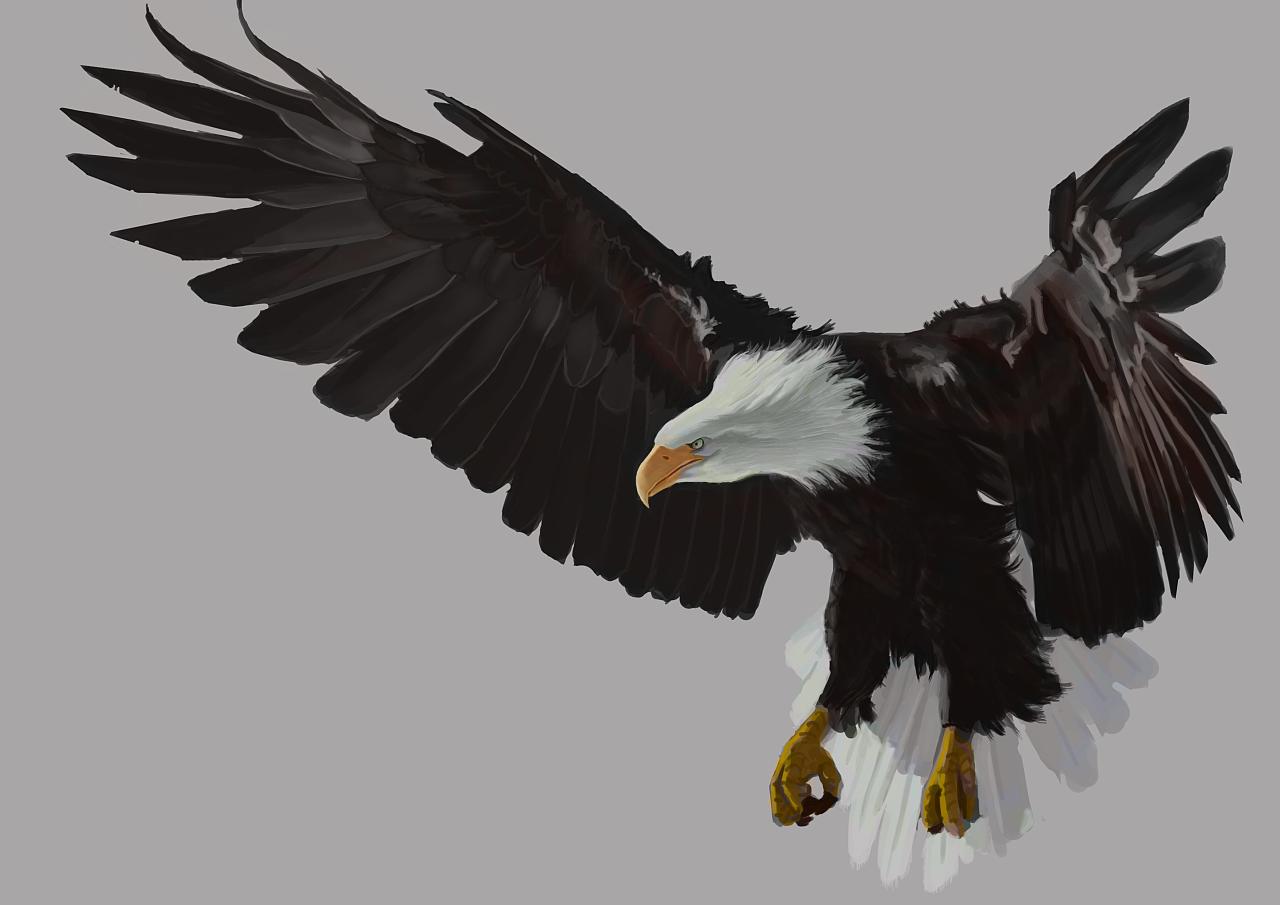 老鹰的彩铅手绘