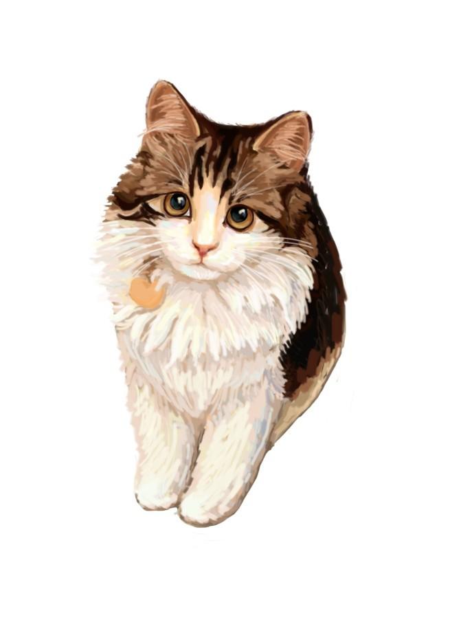公主的简笔画动物猫咪