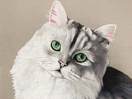 动物不凶猛——手绘动物集合