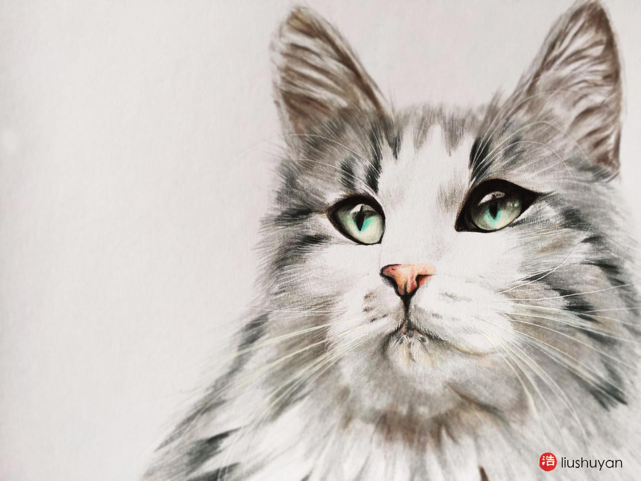 彩铅绘画作品家有萌宠,猫咪定制肖像.