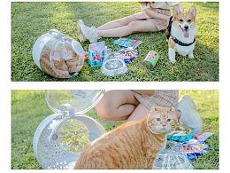 《啊猫啊狗》——丰鸽摄影
