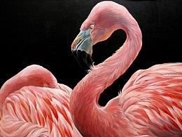 象征幸福爱情的火烈鸟