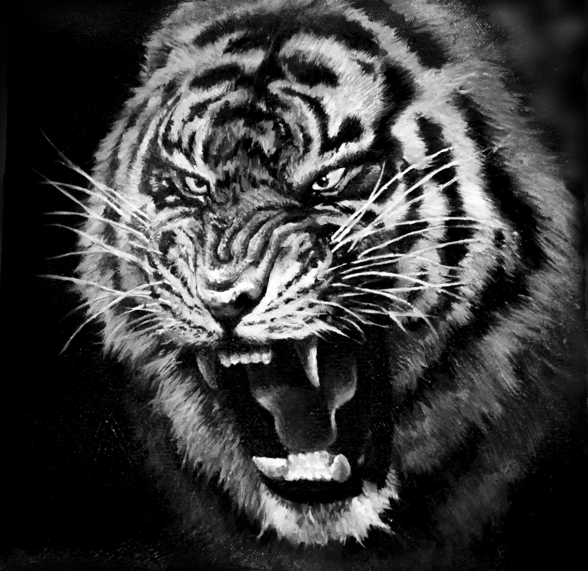 老虎头部-虎头图片