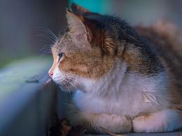 寻猫集93