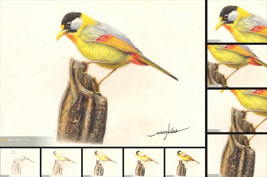 原创作品:彩铅教程~鸟《红钩子》~家乡的一种小动物