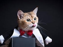 深圳宠物摄影-珀珀宠影之霸道总裁