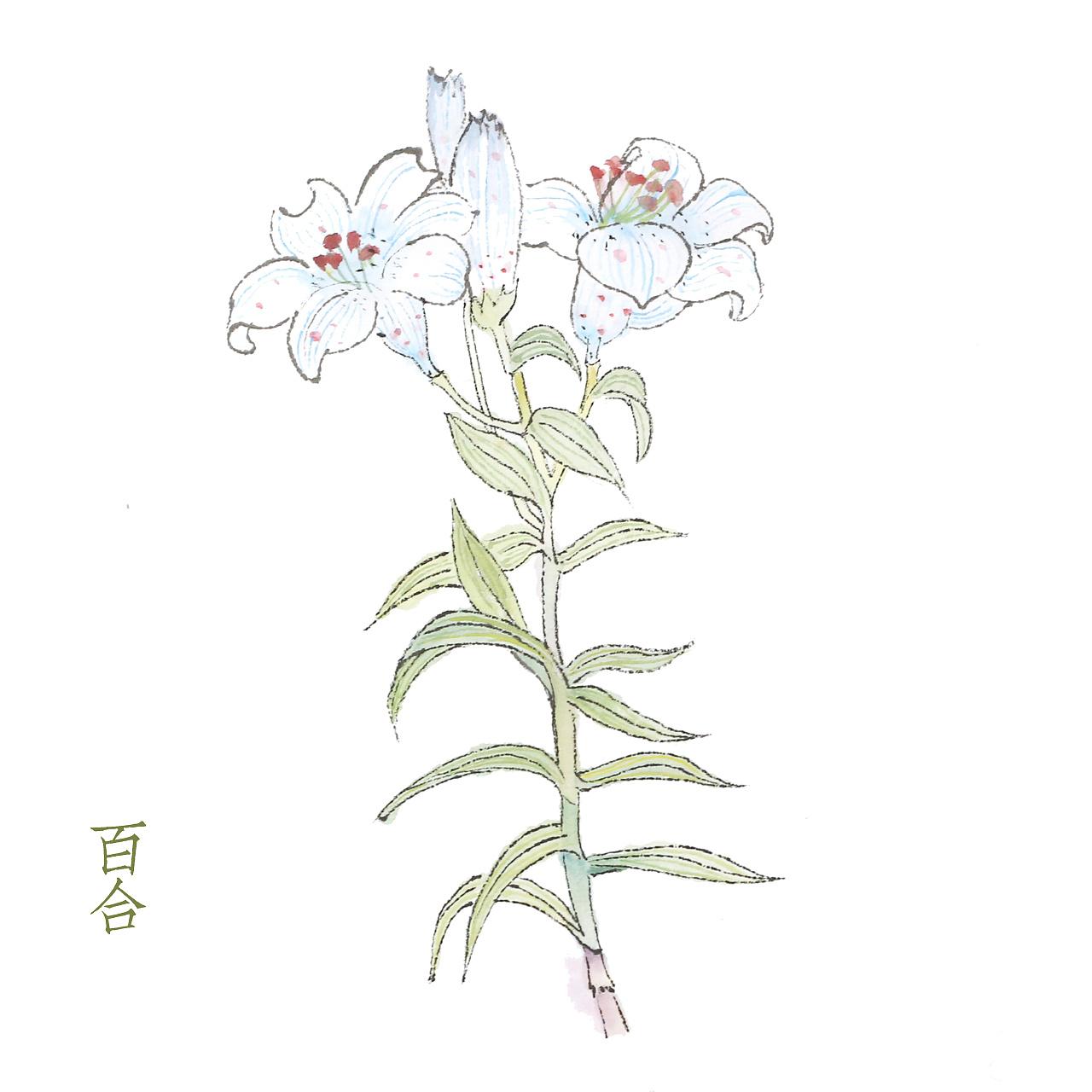 植物彩色线稿高清图