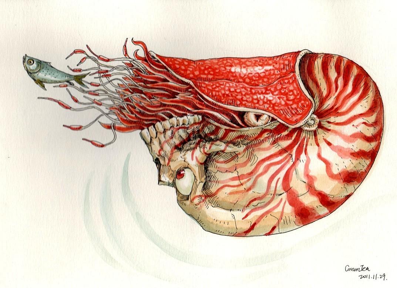 最近喜欢海洋生物·手绘水彩上色··不过