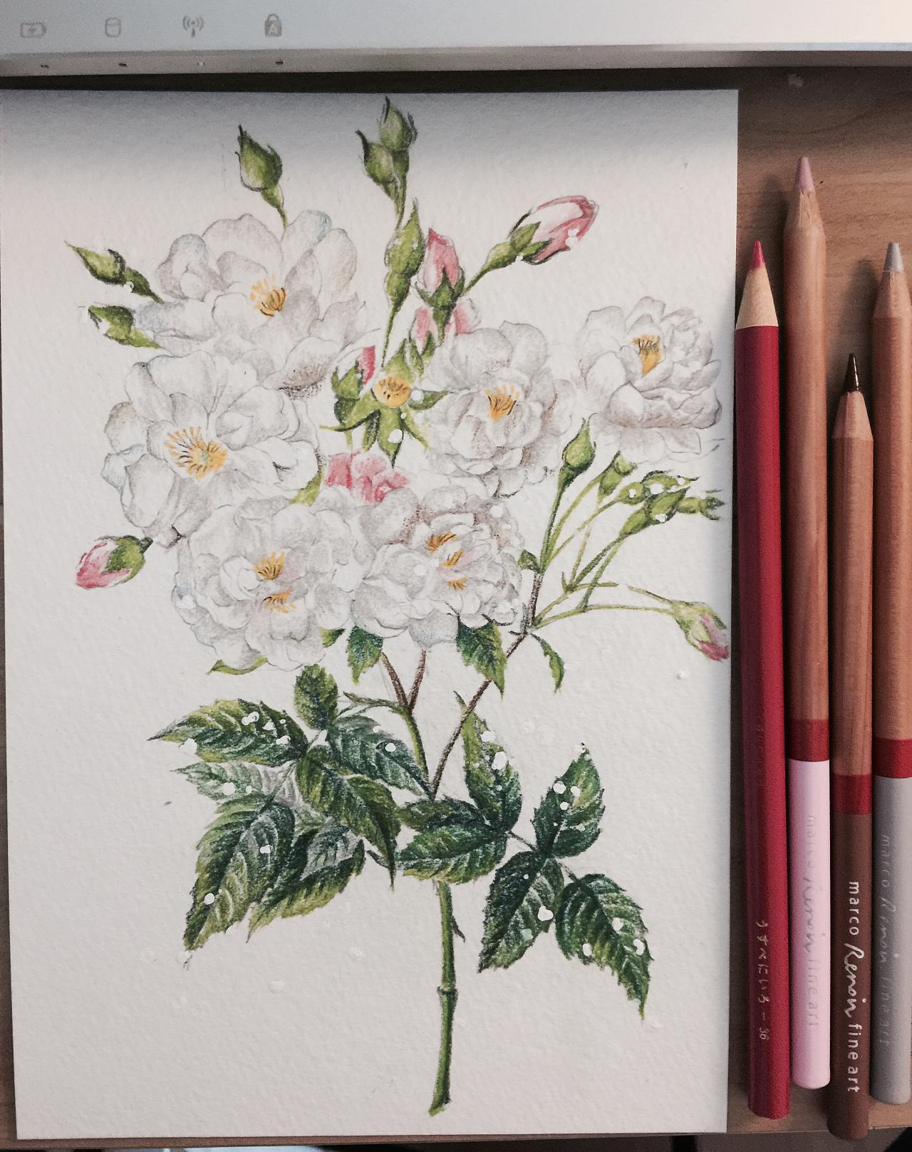 植物彩铅插画