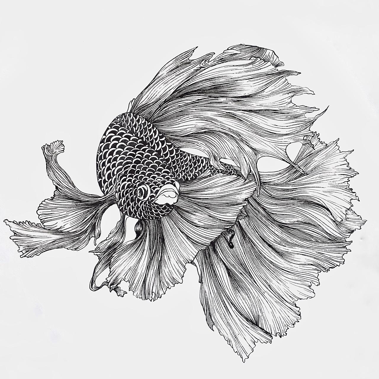 线描金鱼图片
