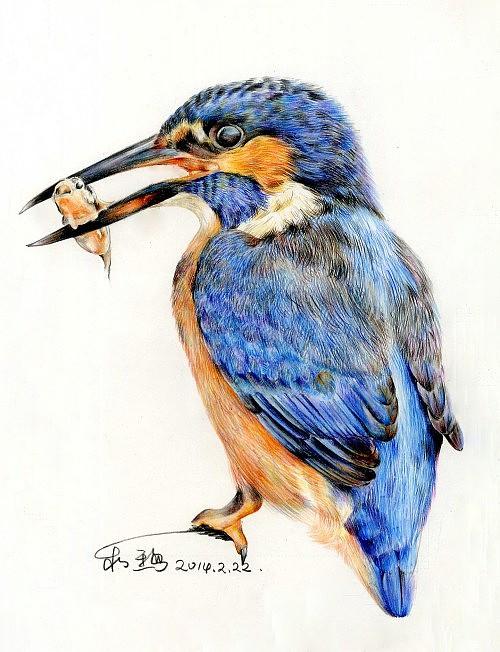彩铅鸟类手绘——回眸