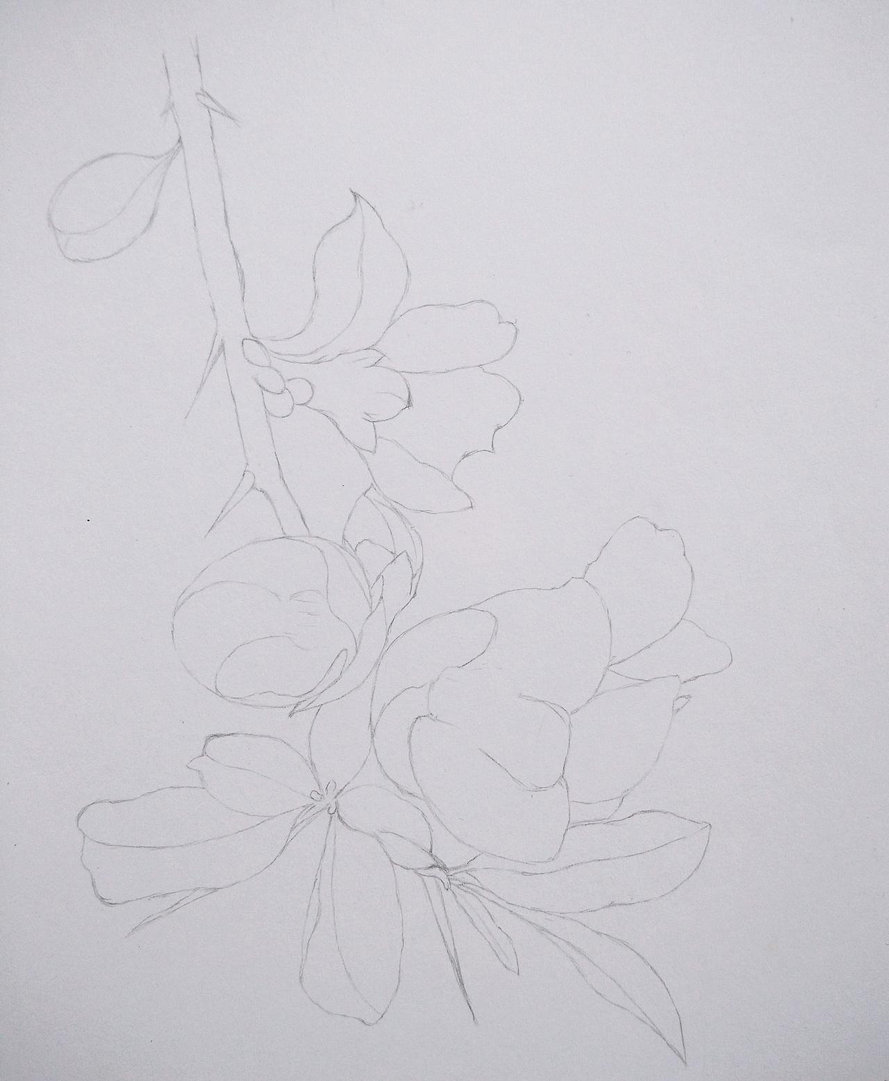 素描彩铅花朵图片简单彩铅手绘花朵画彩铅手绘花