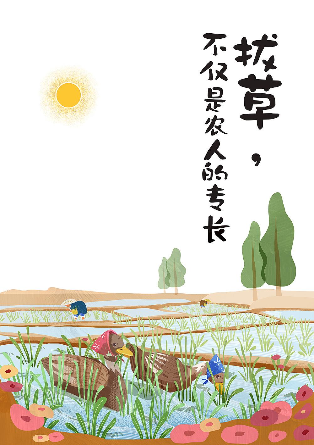 与归来兮有机农庄合作的稻田鸭插画图片