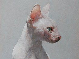 彩铅动物-无毛猫