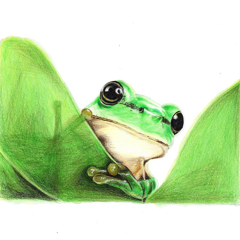 教程:【驴大萌彩铅175】手绘可爱小动物 青蛙 呱儿子(原创文章)