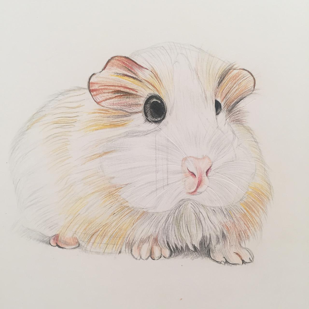 手绘彩铅动物系列|插画|涂鸦/潮流|儒雅的洛洛 - 原创