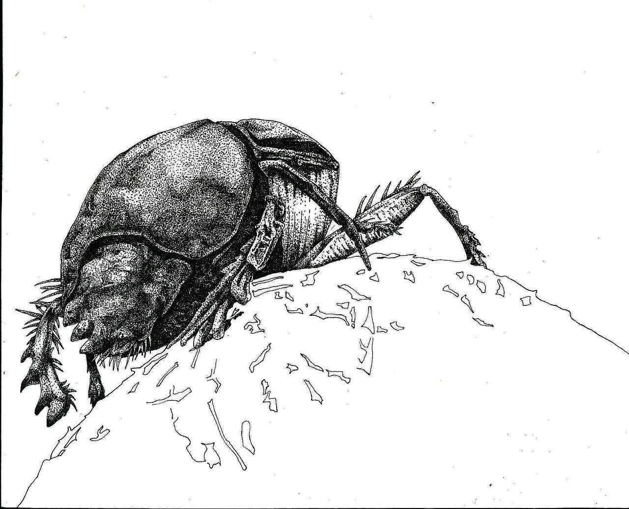 昆虫 点绘