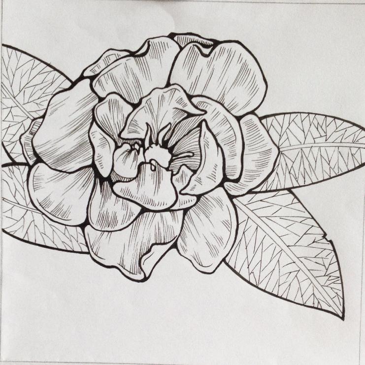 装饰基础 花卉变形