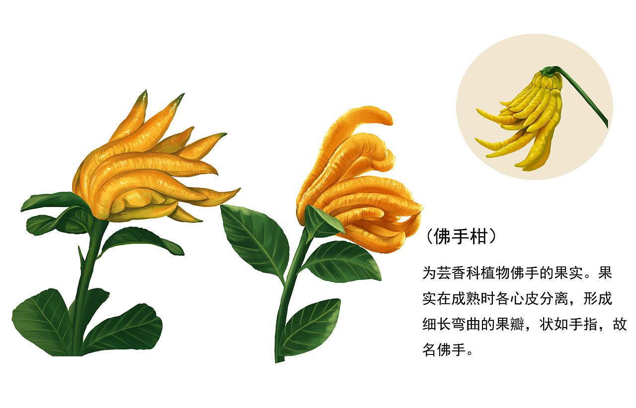植物插画(二)|插画|商业插画|日光倾城417 - 原创作品