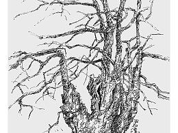 线相系列--钢笔画·树之舞