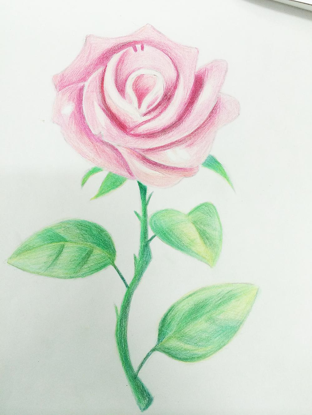 手绘,花朵.