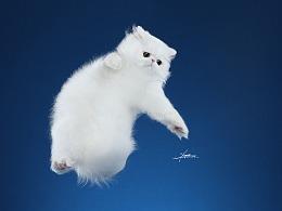 异国长毛猫