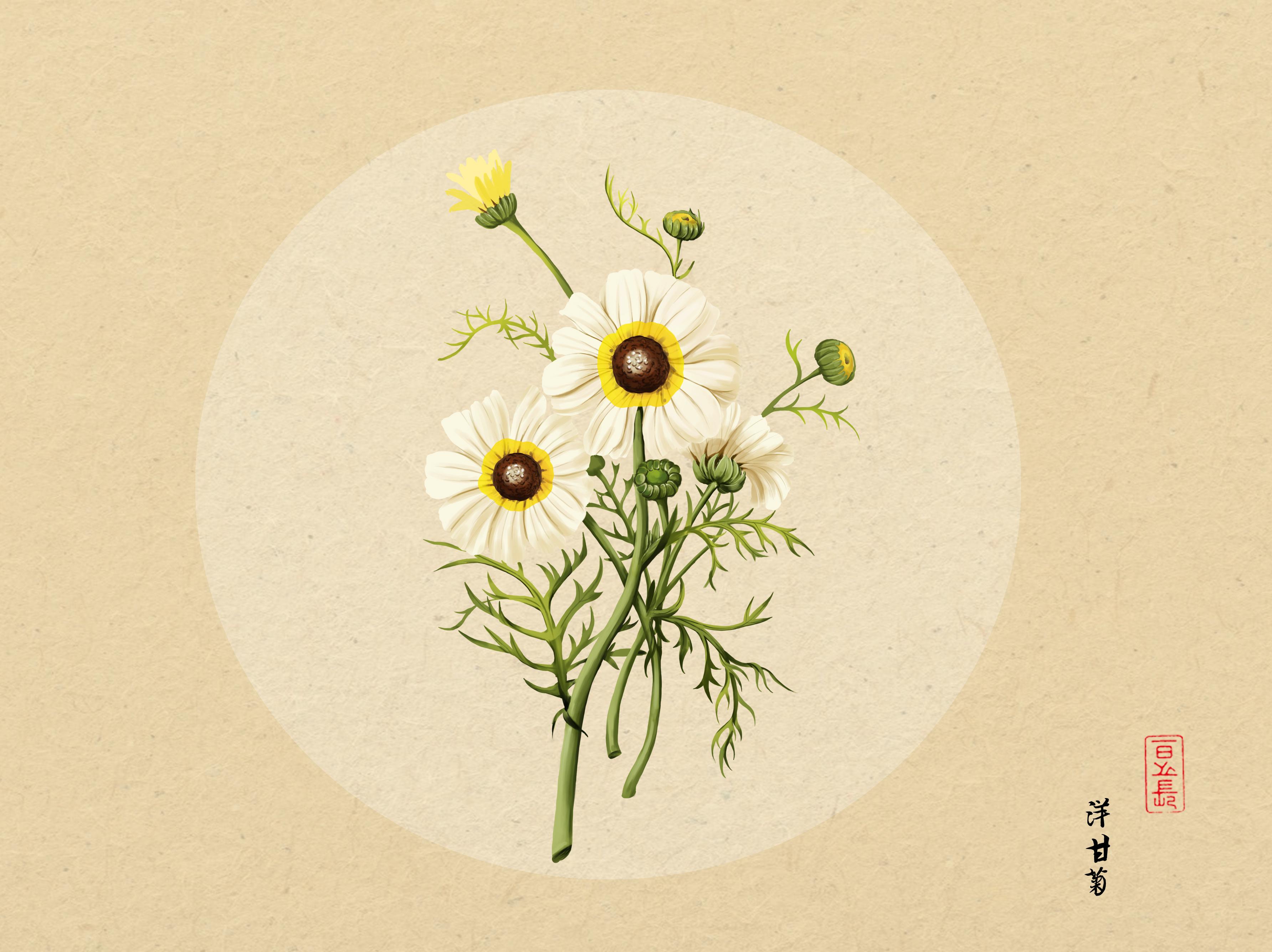 植物插画|插画|商业插画|日光倾城417 - 原创作品