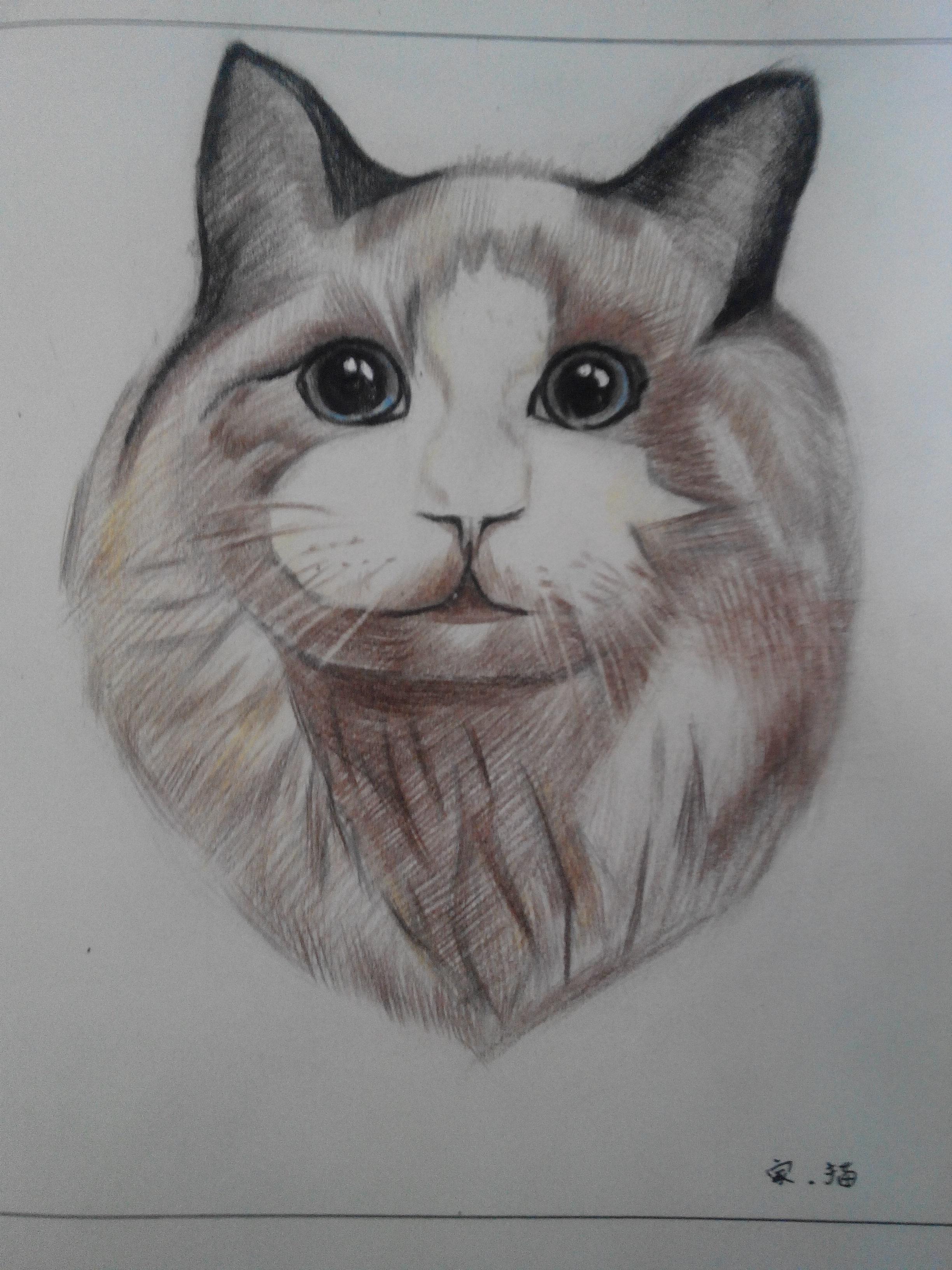 第四次画彩铅 动物