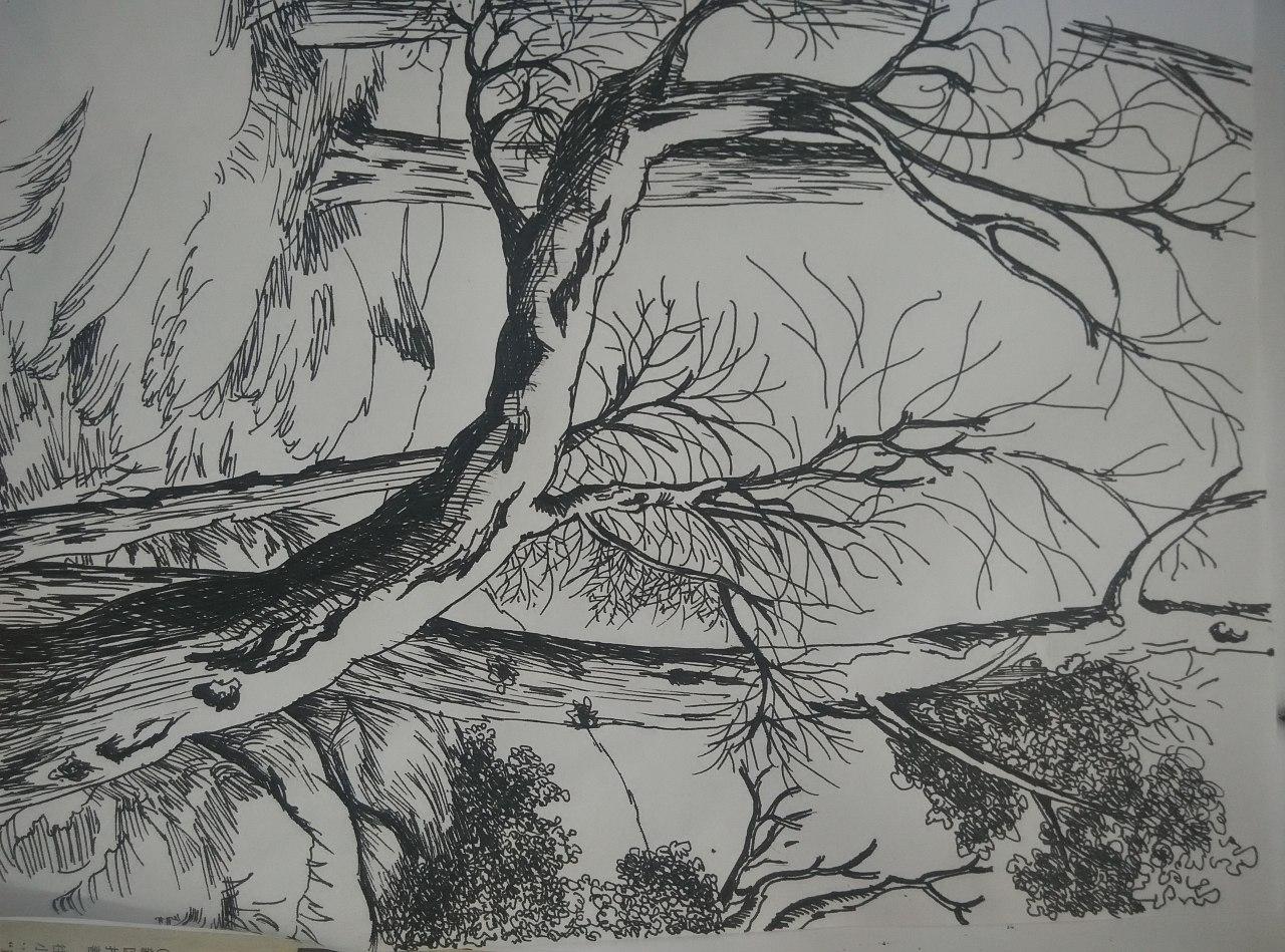 手绘景石顶视图