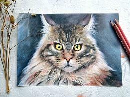 彩铅猫咪绘制—就喜欢这么霸气的喵!
