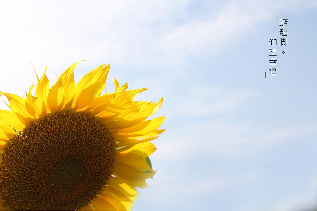 徽州印象·水乡向阳花图片