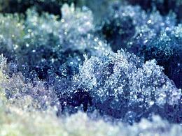 绽影像之《雪拥蓝关》