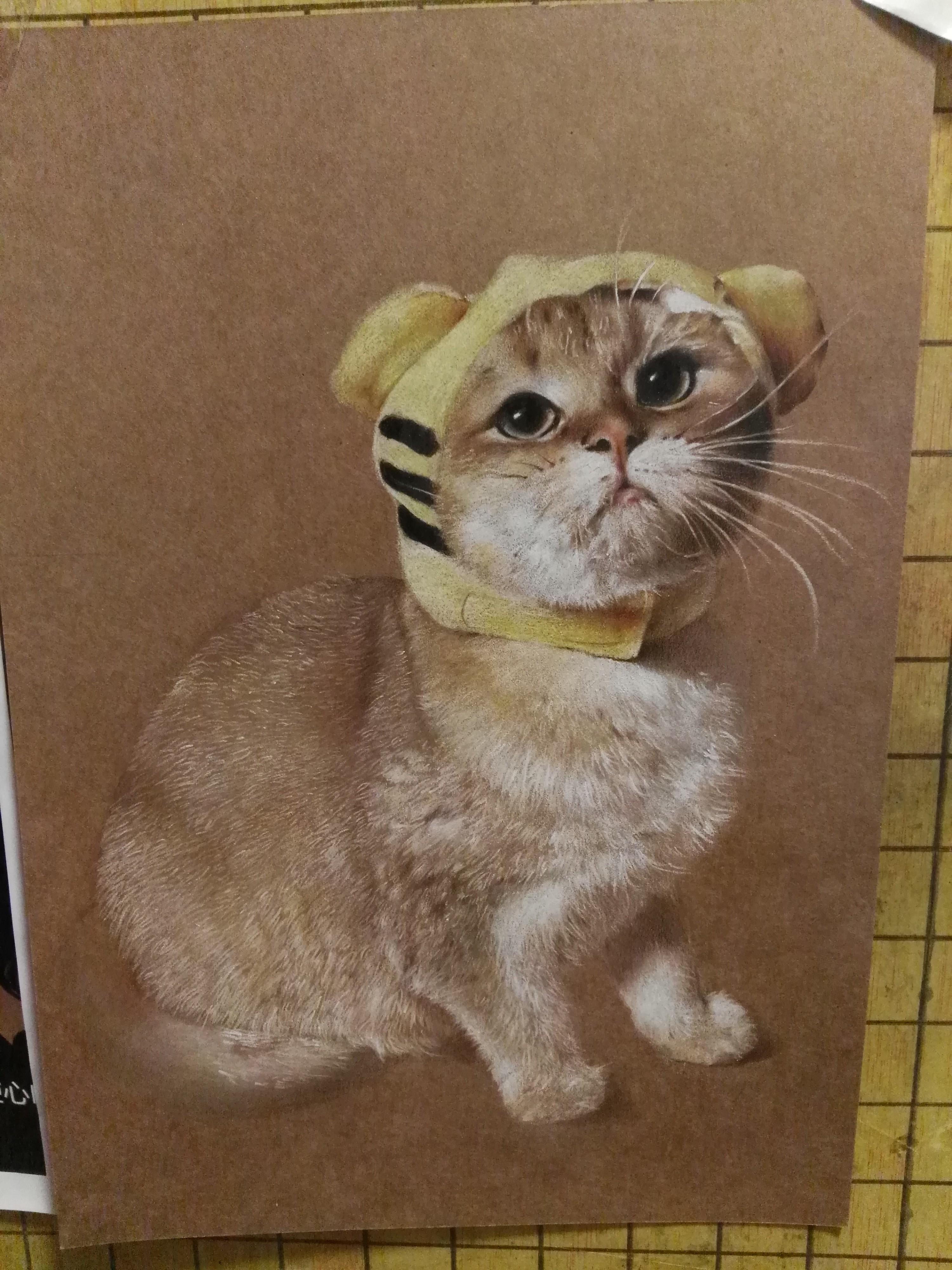 彩铅手绘小奶猫