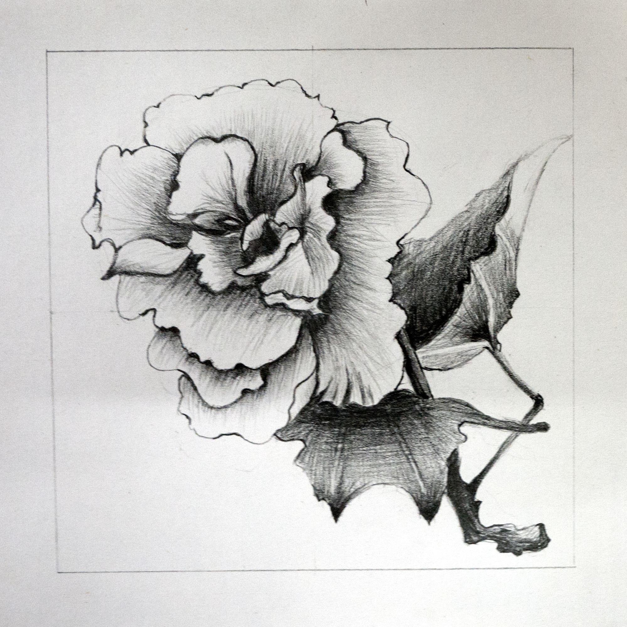 [临摹]手绘素描 - 花朵