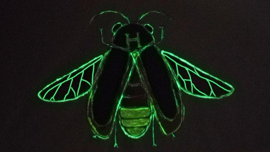 萤火虫 甲虫系列手绘t恤