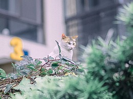寻猫集31
