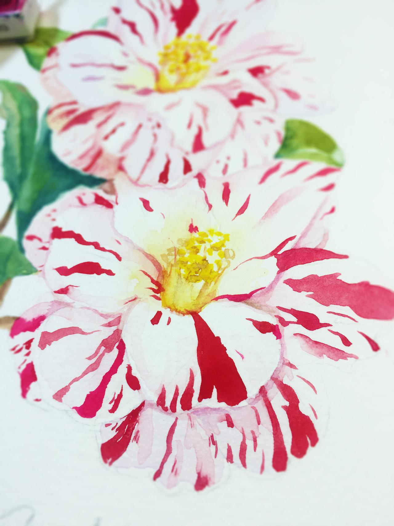 水彩手绘-山茶花