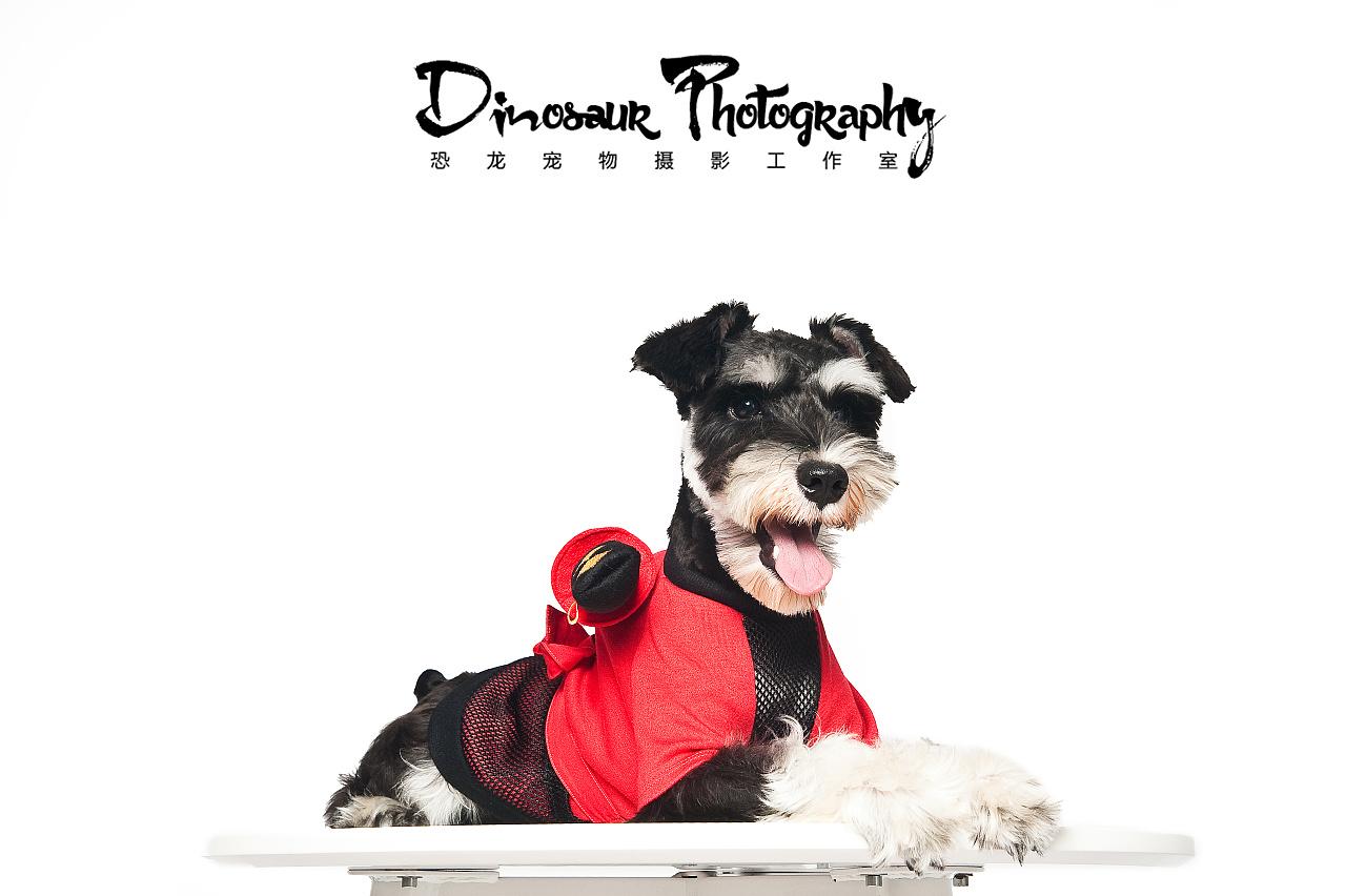 我是小小小忍者【恐龙】宠物摄影嘉兴站