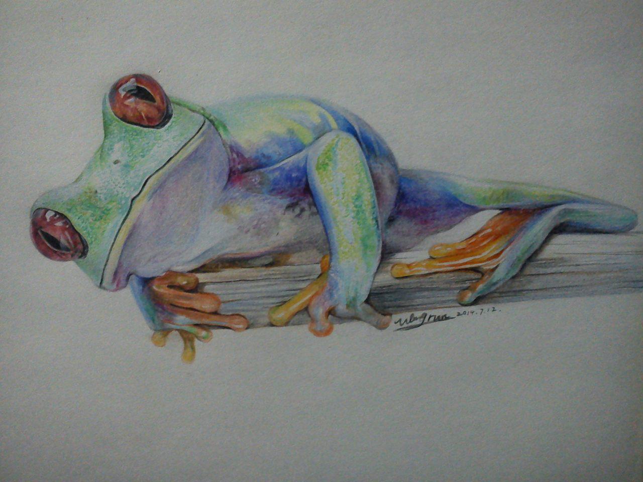 纸上彩铅手绘——《蛙》