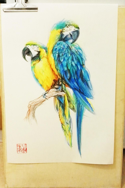 花鸟鱼彩铅手绘家居装饰画