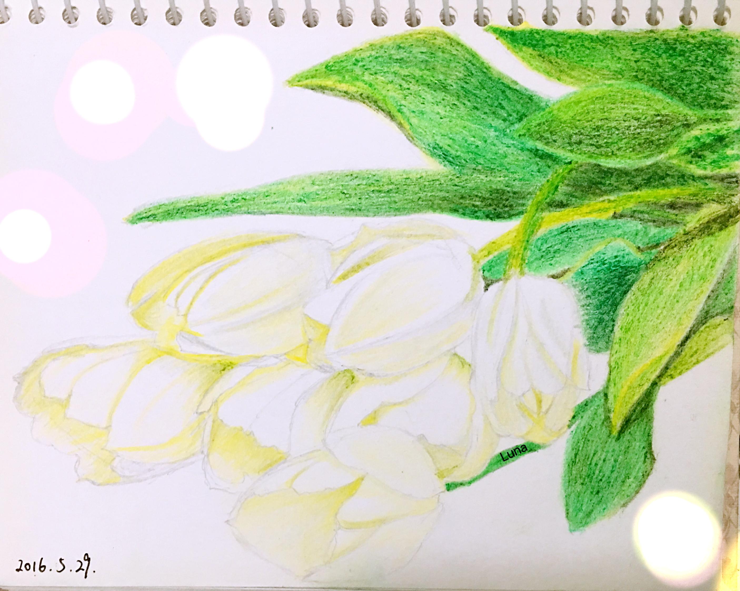 手绘彩铅|插画|插画习作|lunaaaaaa - 原创作品