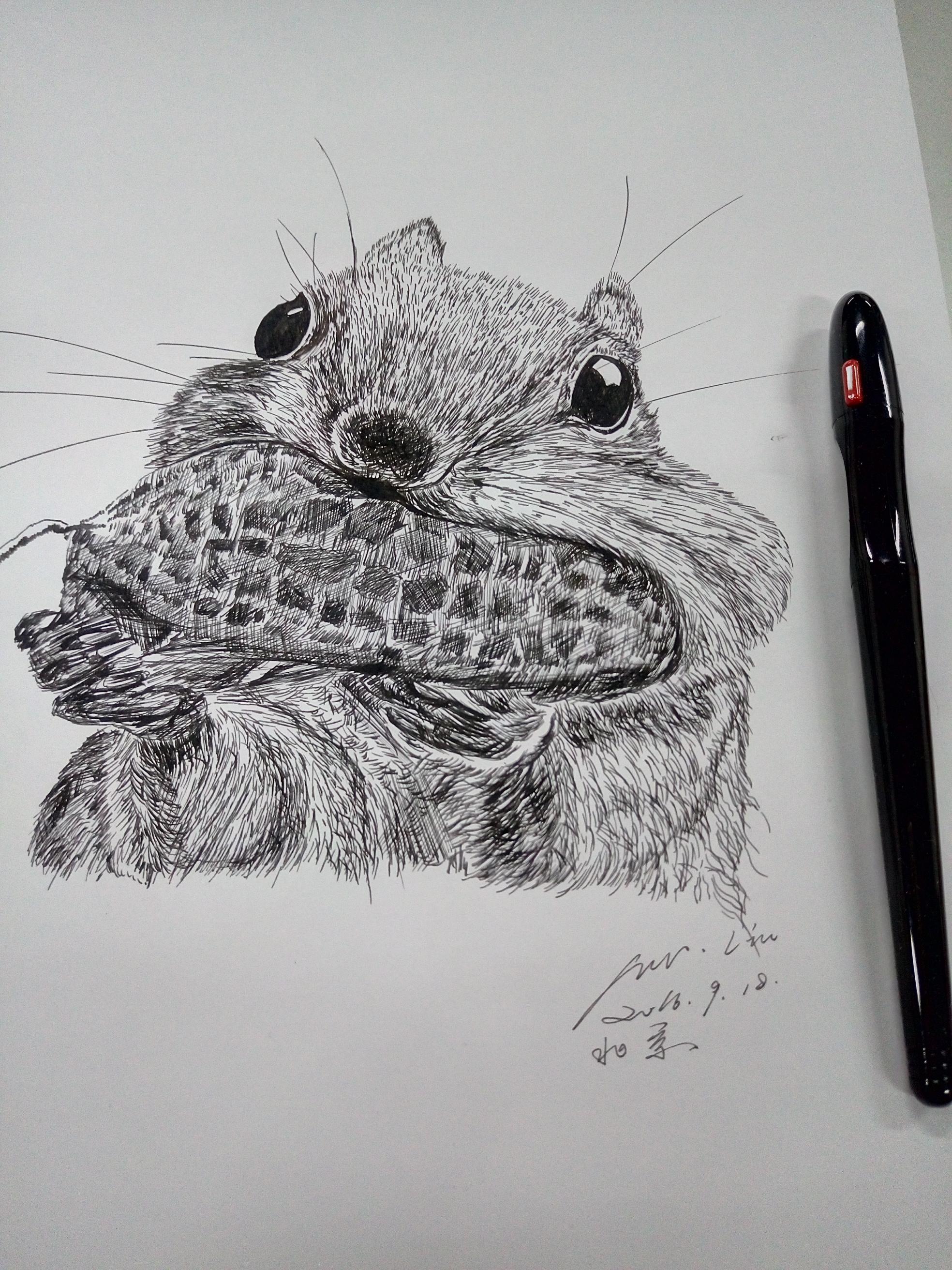 临摹钢笔画