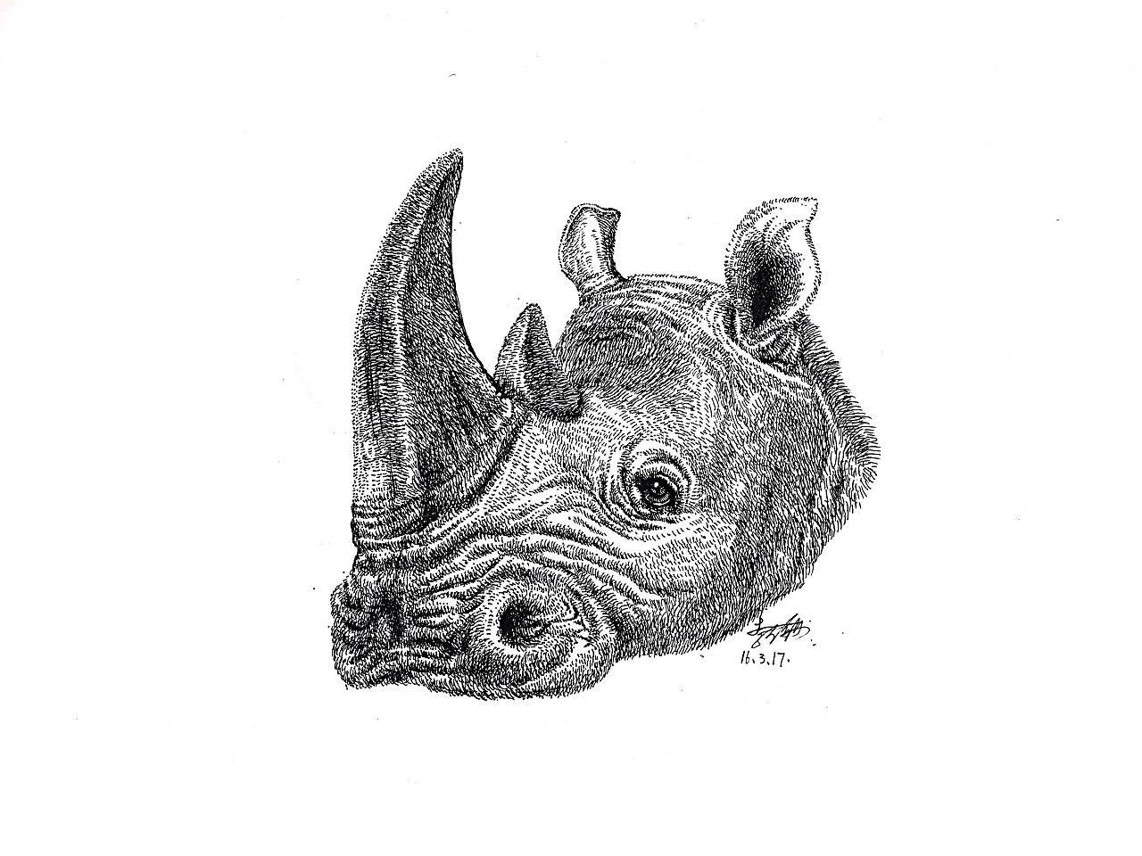 李万海钢笔手绘《犀牛》!
