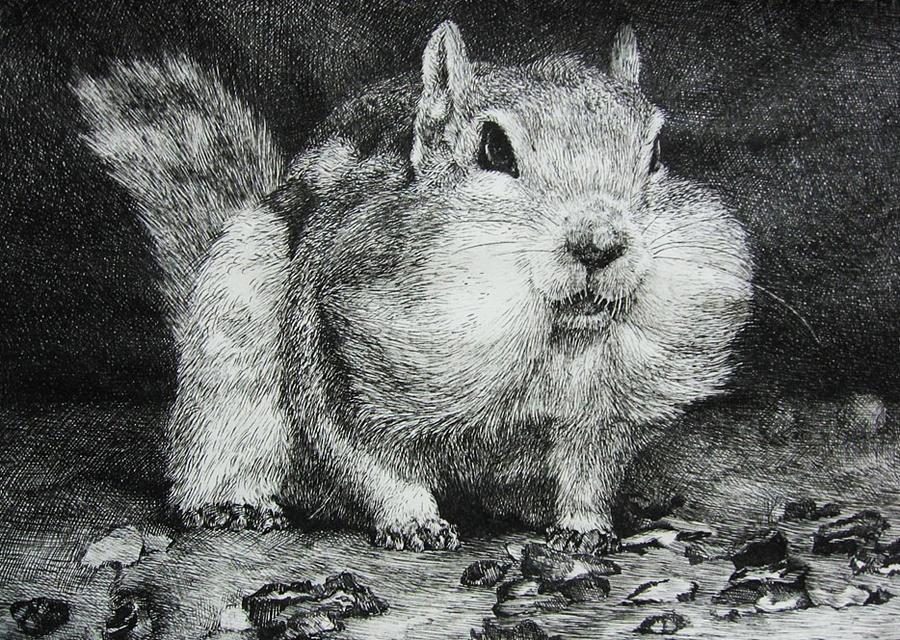钢笔画-风景和动物