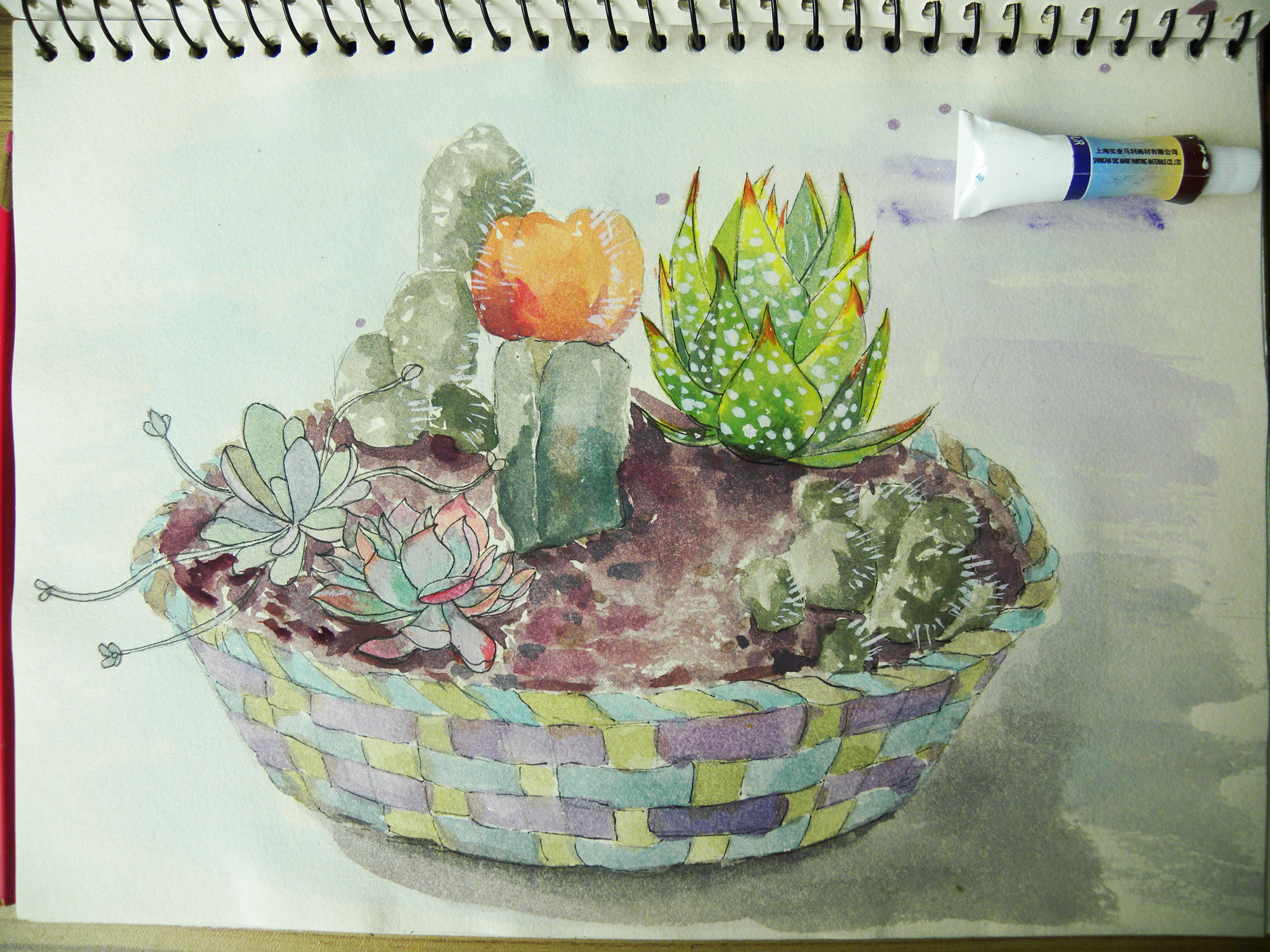 彩铅手绘插画水彩素描签字笔圆珠笔