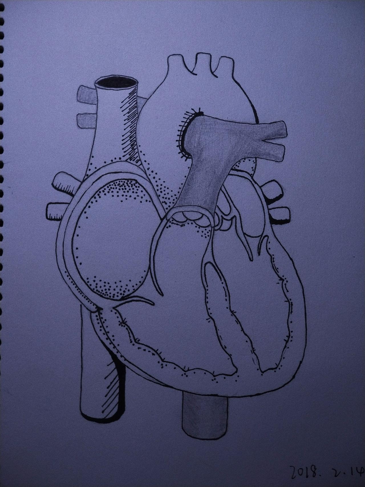我在画一颗心脏图片