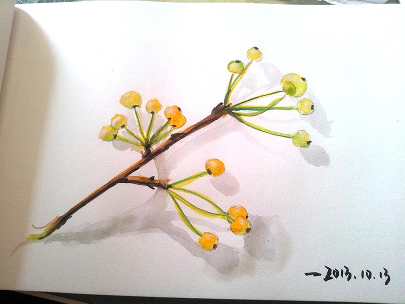 丙烯手绘植物