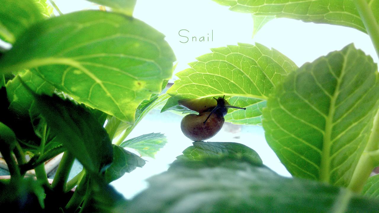 夏天-蜗牛|摄影|动物|摄之初 - 原创作品 - 站酷